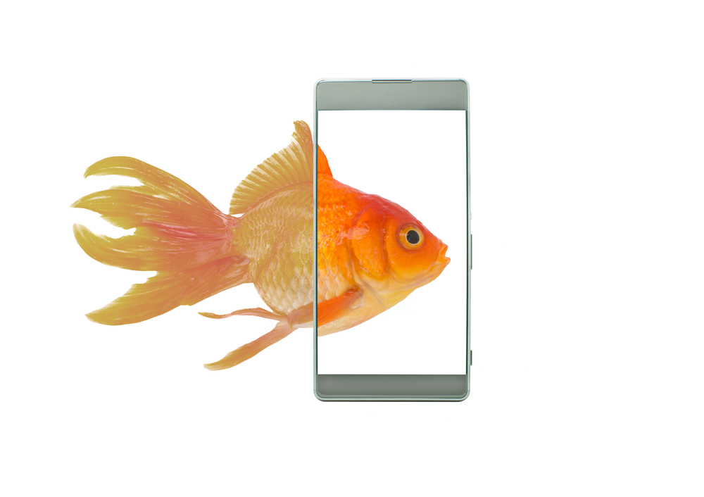 AMOLED Vs OLED: Which is Better and Why - Cashify Blog